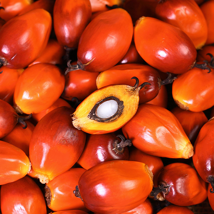 Fruit and Palm kernel