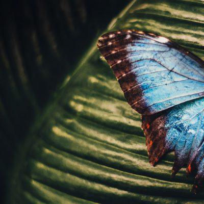 Mariposa image